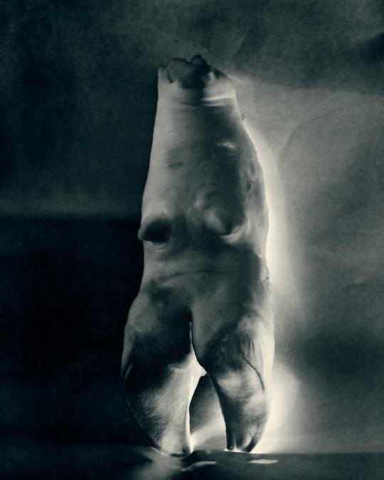 white bone.jpg